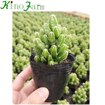 Natural Plant Indoor Plant Succulents