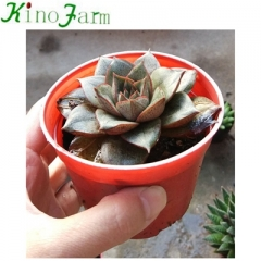 Small Succulent Plants