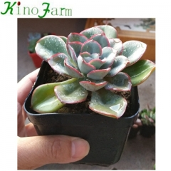 Indoor mini succulent plants